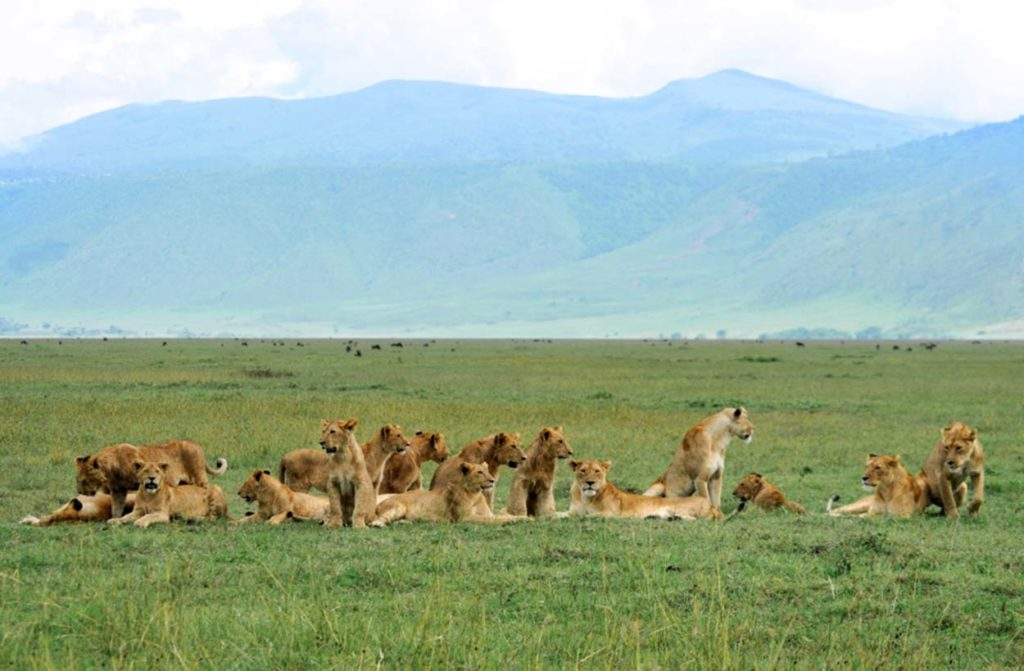 munge_pride_cub_boom_ngorongoro_crater_may2015